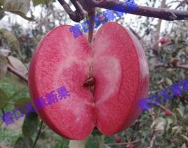 红肉苹果-红色之爱119/06成熟(2017.10)