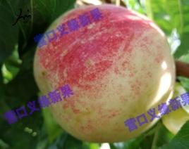 绿衣油桃-成熟(9月底)